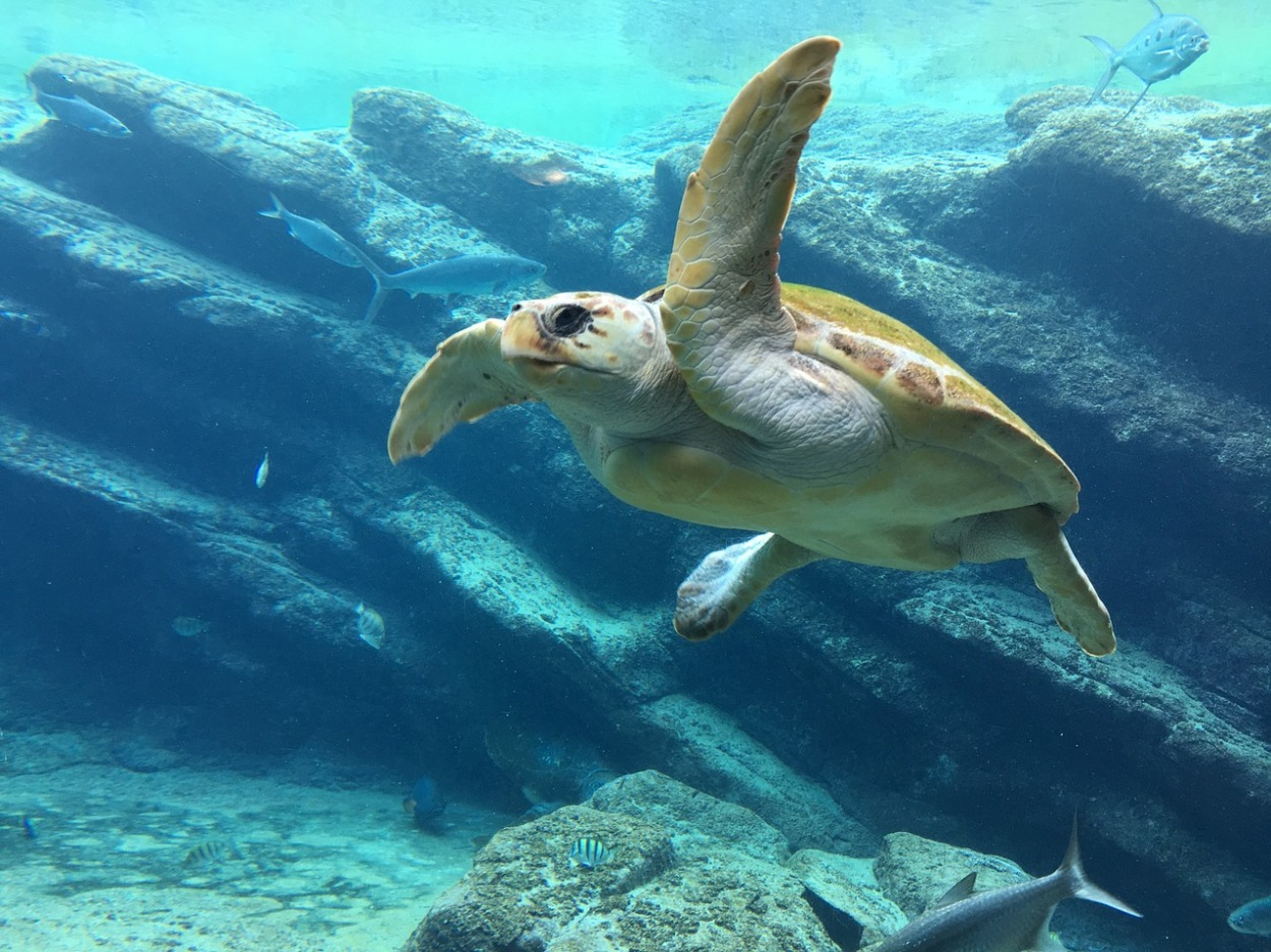 turtle in sea