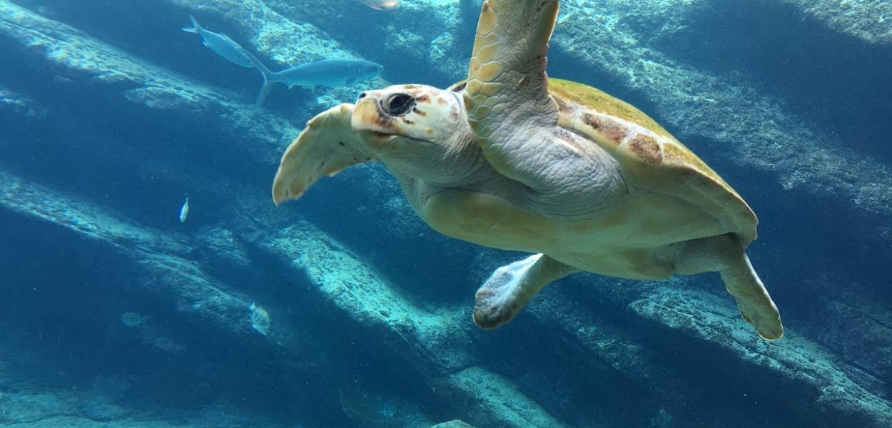 turtle in sea