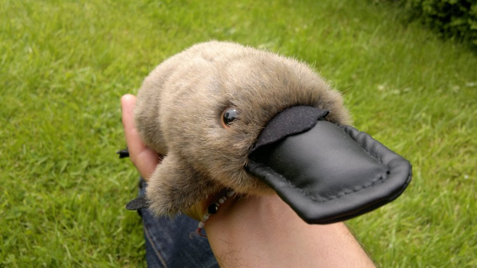 The platypus teaches us about life