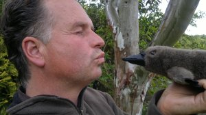 Face to face with a platypus