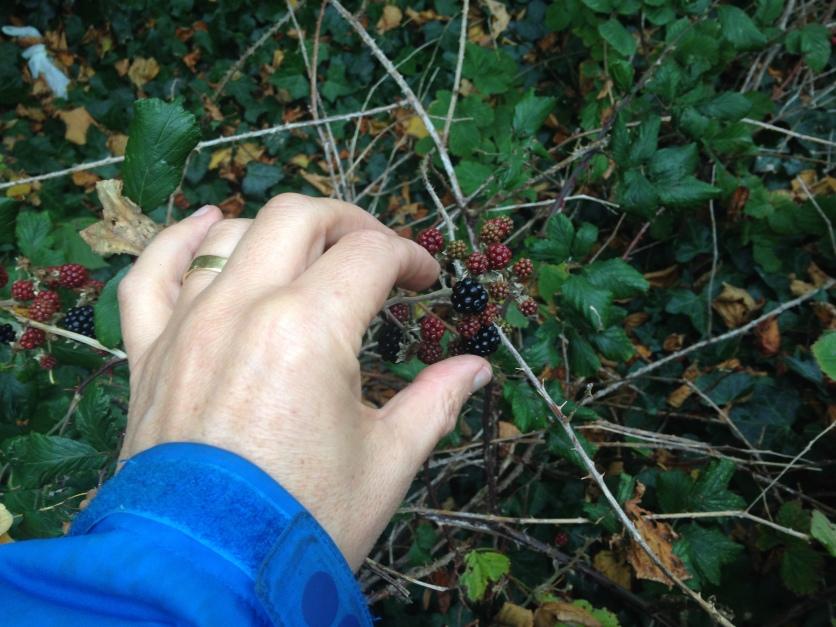 hand reaching fro berries